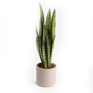 pianta-con-vaso